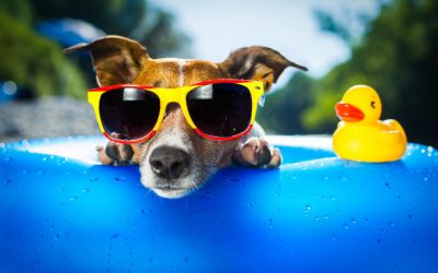 Bailey Eye Care local-eye-doctor-blog-why-wear-sunglasses-1-400x250